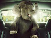 skóra słonia w aucie